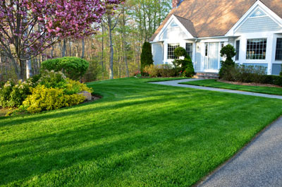 hydroseeded front lawn at residence