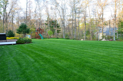 picture of hydroseeded lawn